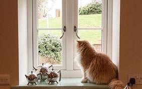 windows and doors-home